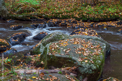 autumn leaves covered willard brook in october Fotobehang