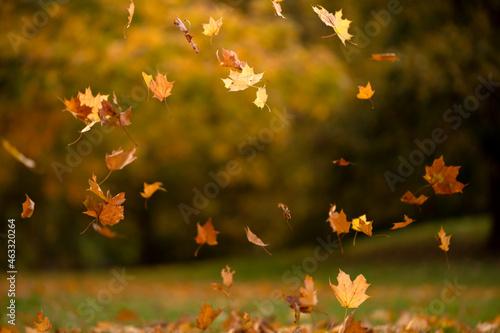 Liście spadające z drzew