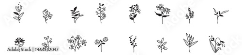 Foto Collection of herbs, branches, flowers