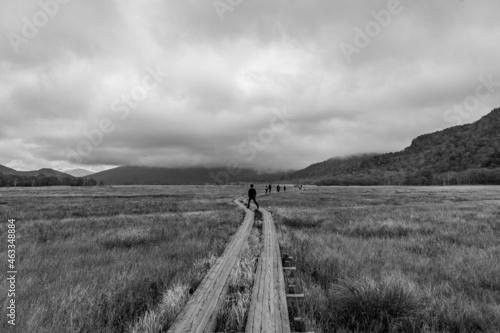 Fototapeta 湿原
