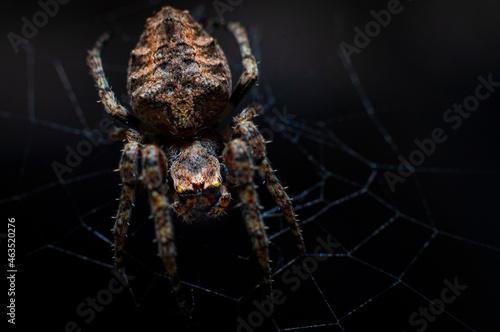 Fotografija araña insecto web naturaleza arácnidos macro bokeh