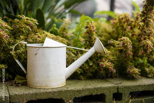 Fototapeta White antique watering can beside plant in garden