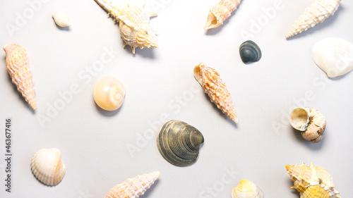 Canvastavla Variety of seashells on gray background