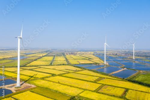 Obraz na plátně windmills on autumn paddy field