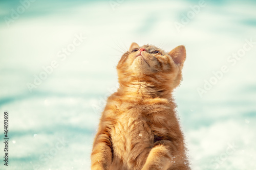 Tablou Canvas Red kitten standing on the snow on the hind legs