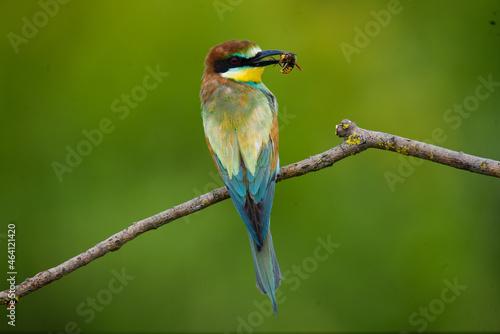 Fotografia Bird with a bee in its beak