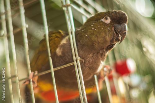 Fotografia Adorable funny parrot with bright multicolored beak