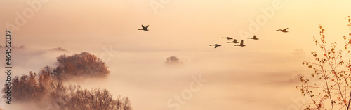 Canvastavla Autumn landscape - a flock of swans flies in the morning fog over the river vall