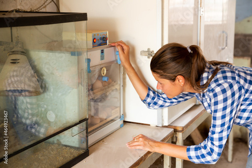 Tela Focused young female farmer inspecting chicken eggs in small electric incubator