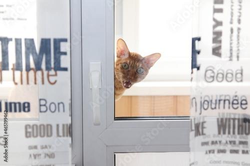 Foto Portrait Of A Cat