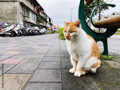 Canvas Cat Lying On Street