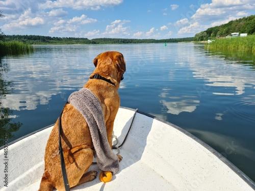 Dog Looking At Lake Shore Fotobehang
